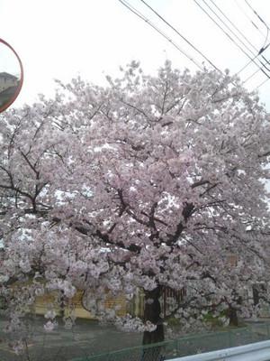 Saitama_r66old